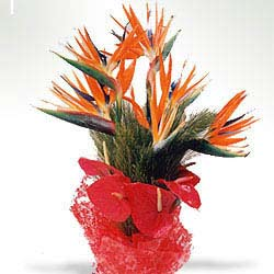 6 Red Anthurium and 5 Orange BOP packed in a colour paper