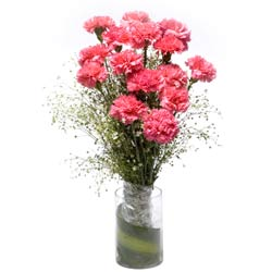 15 Pink Carnations in a glass vase