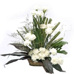 20 White Carnations arranged in a large basket