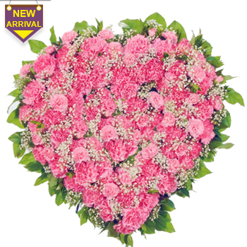 60 Pink Carnations arranged in a  heart shape large basket