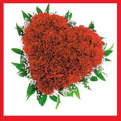 45 Red Carnations arranged in a heart shape