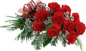 12 Red Carnations bunch