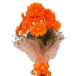 10 Orange Gerberas packed in a cellophane paper