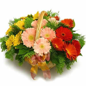 Mixed Gerberas arranged in a cane basket