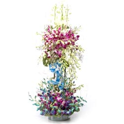 50 Purple and Blue Orchids arranged in a wooden ladder
