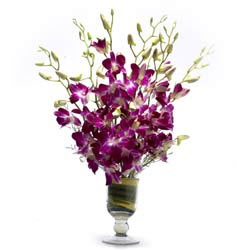 6 Purple Orchids in a glass vase