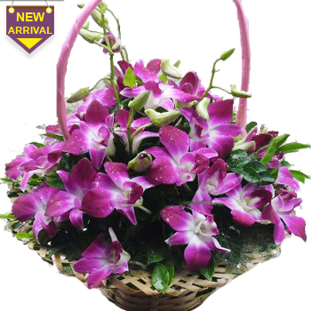 10 Purple Orchids arranged in a large basket