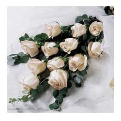 12 White Roses packed in a cellophane paper