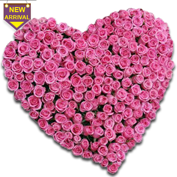 100 Pink Roses arranged in a heart shape