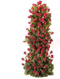 100 Red Roses nicley arranged in 3-4feet high wooden ladder